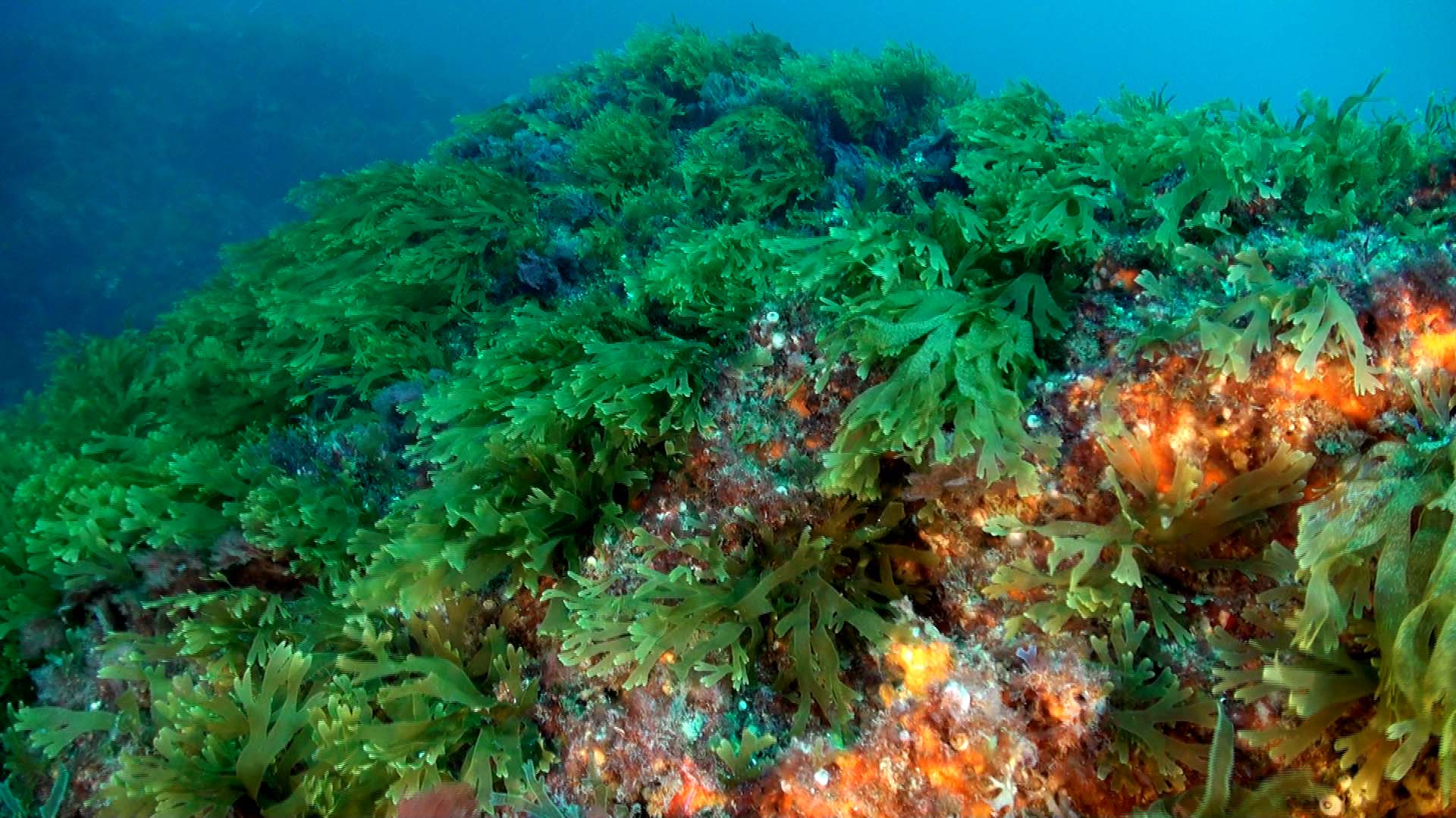 Algas superalimento